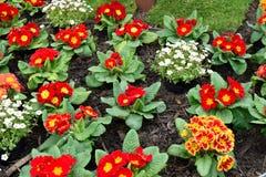 Le beau pot fleurit le plan rapproché au printemps Photos libres de droits