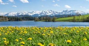 Le beau pré de fleur au lac et à la neige alpins a couvert des montagnes Photo stock