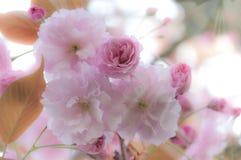 Le beau ressort fleurit le fond Photos libres de droits