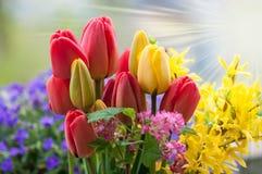 Le beau ressort fleurit le fond Photographie stock