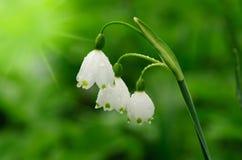 Le beau ressort fleurit le fond Images libres de droits