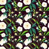 Le beau ressort graphique lumineux a sophistiqué les pivoines blanches florales merveilleuses avec le modèle de bourgeons et de f Photo stock