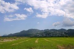 Le beau riz met en place des zones humides images stock