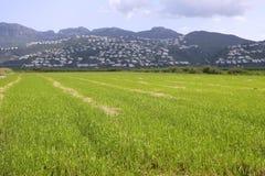 Le beau riz met en place des zones humides photo libre de droits