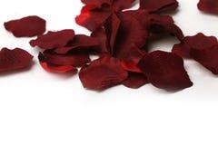 le beau rouge de pétales a monté Photos libres de droits