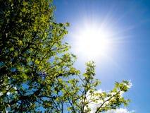 Le beau soleil d'arbre et de source Images stock