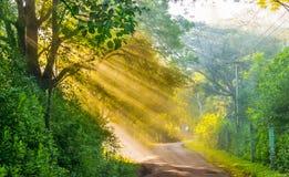 Le beau soleil d'or rayonne dans la forêt de Masinagudi, Inde Photo libre de droits