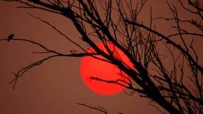 Le beau soleil rouge derrière l'arbre images libres de droits