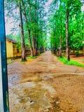 le beau Sri Lanka il vrai rêve du ` s en notre monde Photo stock