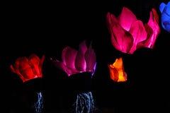 Le beau tissu brillant lumineux fleurit sur le fond noir Image libre de droits