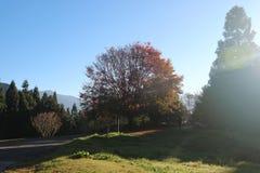 Le beaux soleil et traînées d'hiver Photos stock