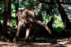 Le bel éléphant d'Asie se tient en rivière Nuages pittoresques sur le fond image libre de droits