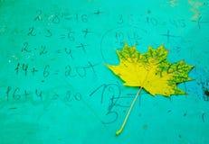 Le bel érable part en automne Image libre de droits