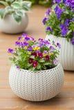 Le bel été de pensée fleurit dans des pots de fleurs dans le jardin Photographie stock libre de droits