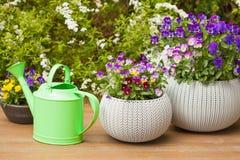Le bel été de pensée fleurit dans des pots de fleurs dans le jardin Photo stock