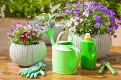 Le bel été de pensée fleurit dans le jardin, boîte d'arrosage, outils Image libre de droits