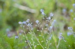 Le bel amour pêche des fleurons Photo stock