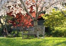 Le bel arbre fleurit en stationnement un jour de source Photo stock