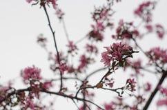 Le bel arbre fleurit le fond Photographie stock