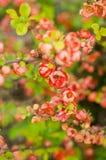 Le bel arbre fleurit le fond Image libre de droits