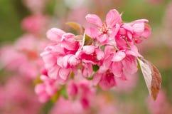 Le bel arbre fleurit le fond Photographie stock libre de droits