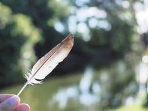 Le bel au sol d'herbe de main de plume a brouillé l'art abstrait de fond de bokeh pour le papier peint Photographie stock