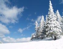 le bel hiver d'horizontal Images libres de droits