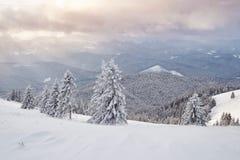 Le bel horizontal de l'hiver avec la neige a couvert des arbres photo libre de droits