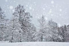 Le bel horizontal de l'hiver avec la neige a couvert des arbres Photos stock
