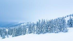 Le bel horizontal de l'hiver avec la neige a couvert des arbres Montagnes de l'hiver banque de vidéos