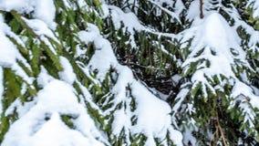 Le bel horizontal de l'hiver avec la neige a couvert des arbres Montagnes de l'hiver clips vidéos