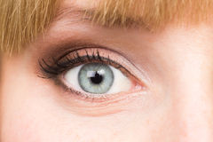 Le bel oeil gris avec composent photos libres de droits