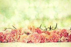 Le bel oeillet de floraison fleurit avec le fond d'éclairage de bokeh Photo stock