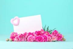 Le bel oeillet de floraison fleurit sur un fond blanc avec Image libre de droits