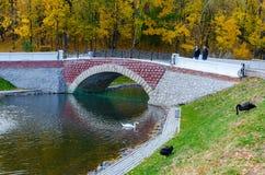 Le Belarus, Gomel, l'étang de cygne en parc d'automne Images stock
