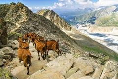 Le belle alpi svizzere abbelliscono con le montagne, le rocce ed il ghiacciaio Fotografie Stock Libere da Diritti