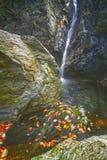 Le belle cascate di velo, rocce muscose, giranti lascia in compagno Immagine Stock