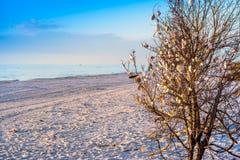 Le belle conchiglie appendono su un albero in Anna Maria Island, Florida immagini stock libere da diritti