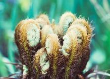 Le belle felci piantano il fondo floreale naturale della felce al sole fotografia stock libera da diritti