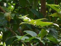 Le belle foglie è assomigliare alla nostra vita Fotografia Stock