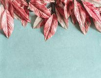 Le belle foglie rosa rasentano il fondo blu pastello, la vista superiore, disposizione del piano immagini stock libere da diritti