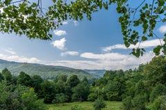 Le belle montagne carpatiche, betulla si ramifica e lascia nella priorità alta Immagine Stock