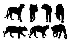 Le Bengale royal Tiger Silhouettes-Vector Images stock