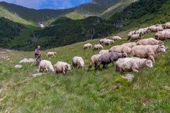 Le berger Image libre de droits