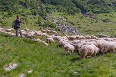 Le berger Photos stock