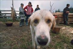 Le berger et le chien Image stock