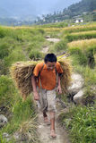 Le Bhutan, Wangdi Phodrang, paysan image stock