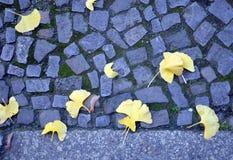 Le biloba jaune de Ginkgo part sur une rue de pavé rond Images stock