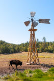 Le bison Photo libre de droits