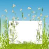 Le blanc chantent dans l'herbe Photos stock